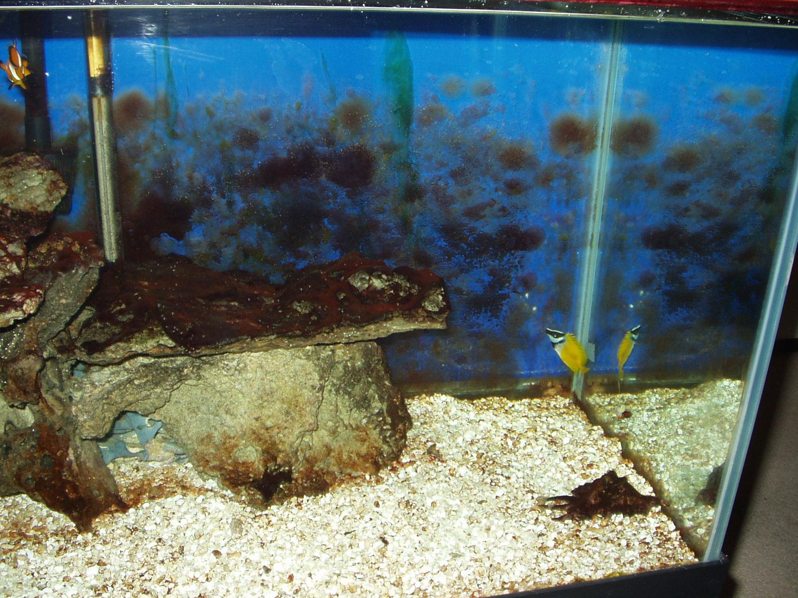 Aquarium algae control how i got rid of nuisance algae in for How to remove algae from fish tank glass