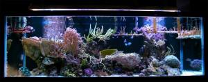 180 Gallon Reef Build